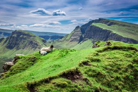 View to sheeps in Quiraing, Scotland, United Kingdom