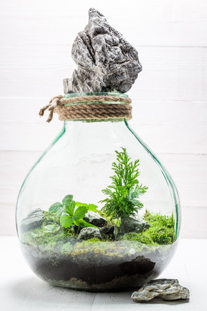 Beautiful jar with piece of forest, save the earth idea