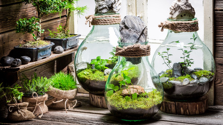 Stunning jar with piece of forest, save the earth concept Stock Photo