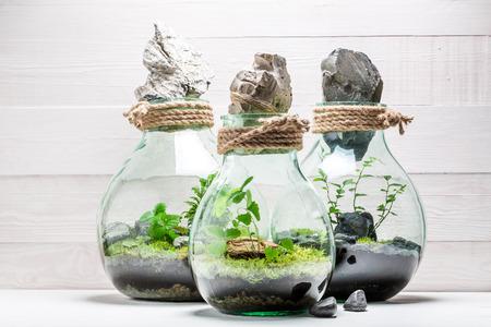 地球概念保存瓶に驚くほどの熱帯雨林