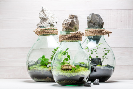 Amazing rain forest in a jar, save the earth concept