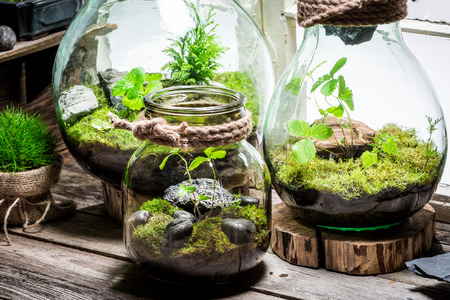 Wonderful rain forest in a jar, save the earth idea