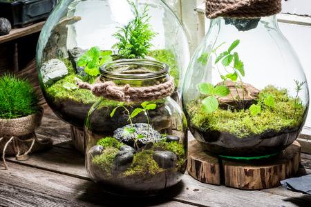 Wonderful rain forest in a jar, save the earth idea Stok Fotoğraf - 65174204
