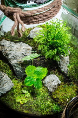 Amazing jar with live forest with self ecosystem Stock Photo