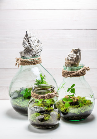 Wonderful jar with live forest with self ecosystem