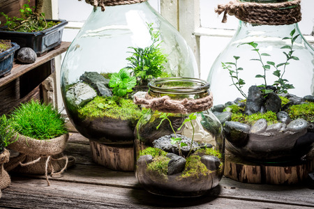 Beautiful jar with live forest with self ecosystem 版權商用圖片 - 65174602
