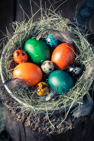 huevos de codorniz: Colourfull Easter eggs in the rustic cottage
