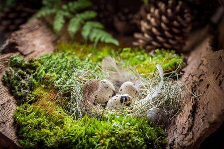 Verschillende eieren voor Pasen in bos bij zonsopgang