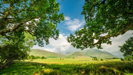 cumbria: Old and big trees in District Lake, England