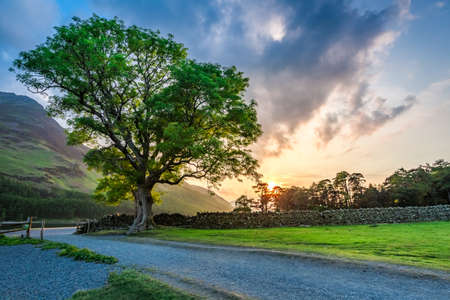 lake district england: Wonderful field with big tree in District Lake, United Kingdom