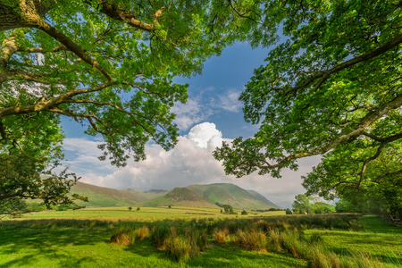 lake district england: Beautiful big trees and mountains in District Lake