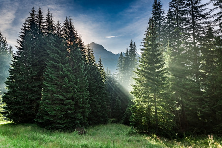 Wonderful forest in Tatra Mountains at sunrise in summer, Poland