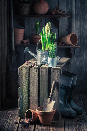 Small green plants and old gardening tools