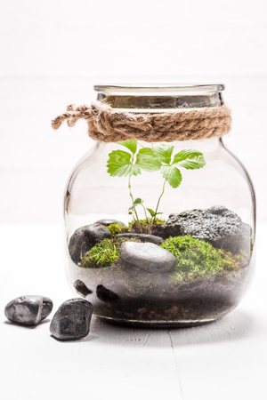 Stunning jar with piece of green forest Stock Photo - 78528001