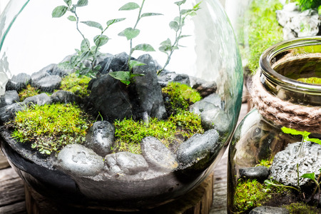 Stunning jar with piece of live forest Stock Photo - 78528019
