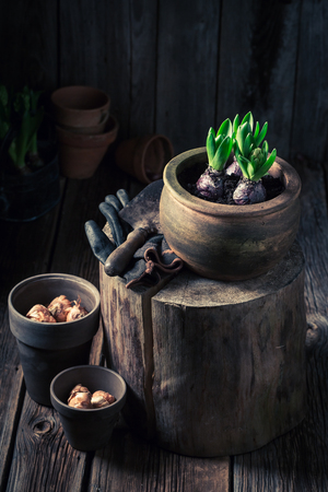 Repotting green plants in the rustic wooden cottage