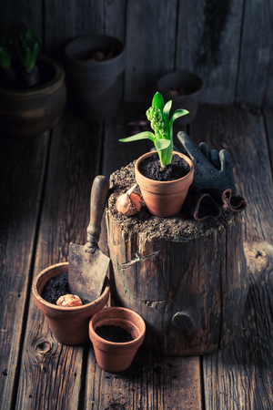 Green plants and old red clay pots in wooden shed Stock Photo