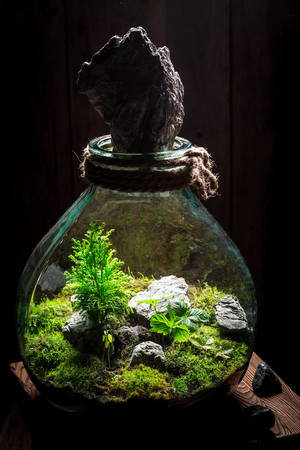 Small jar with piece of green forest Stock Photo
