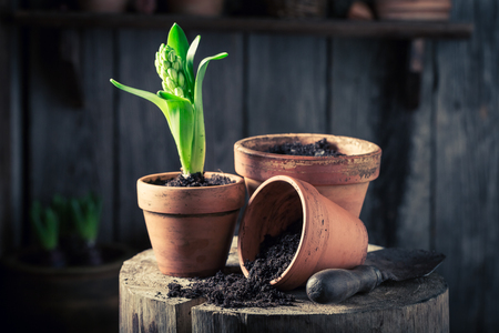 waders: Young green plants and old red clay pots
