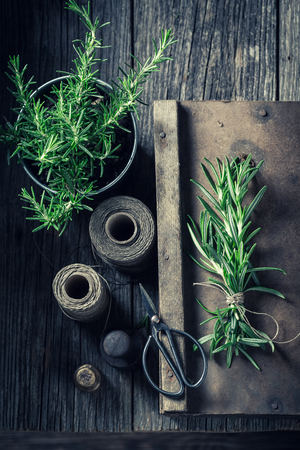 Fresh and intensive rosemary in a rustic kitchen Reklamní fotografie
