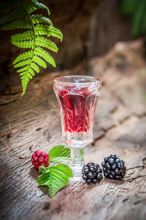 witchdoctor: Homemade liqueur made of blackberries and alcohol in forest