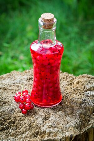 witchdoctor: Sweet liqueur made of redcurrants and alcohol in summer Stock Photo