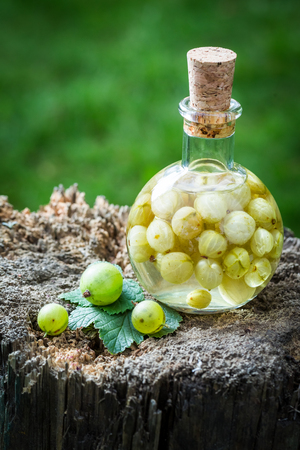 witchdoctor: Sweet liqueur made of alcohol and gooseberries in summer