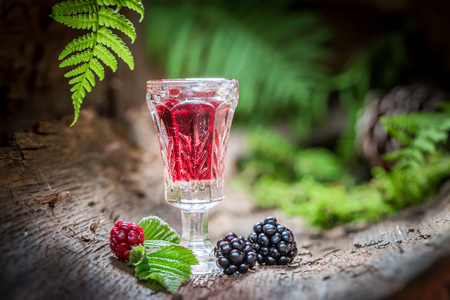 witchdoctor: Sweet liqueur made of alcohol and blackberries in forest