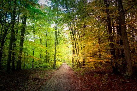 Wonderful forest in the fall in Poland