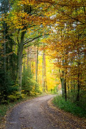 Schöner Weg im Wald in Europa Standard-Bild - 83021513