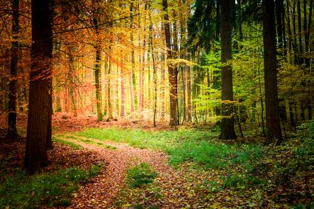 Sonniger Weg im Wald in Europa
