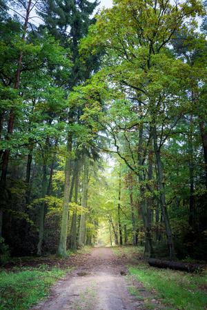 Wunderbarer Weg im Wald in Europa Standard-Bild - 82987191