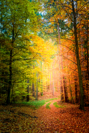 Erstaunlicher Weg im Wald in Europa