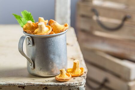 Edible mushrooms in an old aluminum cup Stock Photo