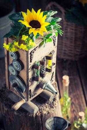 해바라기와 씨앗으로 기름을 만드는 수제 기계