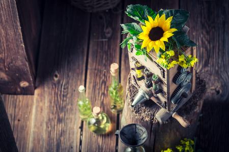 Original virgin oil machine with sunflower and seeds Фото со стока