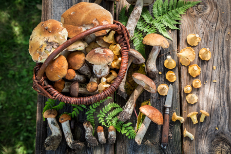 Edible wild mushrooms straight from the forest Imagens