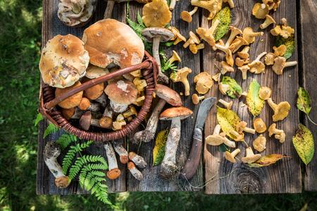 오래 된 목조 소박한 테이블에 고귀한 야생 버섯 스톡 콘텐츠