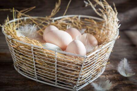 農場から健康的で生態学的な卵 写真素材