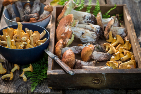 Raw wild mushrooms full of flavour and aromatic