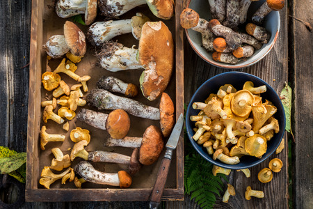 Noble wild mushrooms full of flavour and aromatic