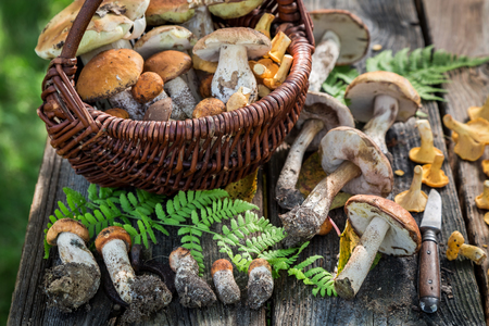 Various wild mushrooms on old wooden rustic table