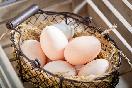 Good and ecological eggs with hen feathers Stock Photo