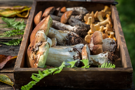 Raw wild mushrooms with green fern from forest Stock Photo