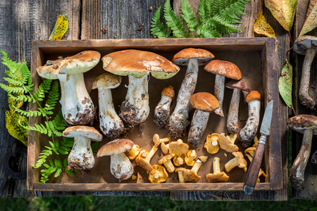 Fresh wild mushrooms collected in the autumn
