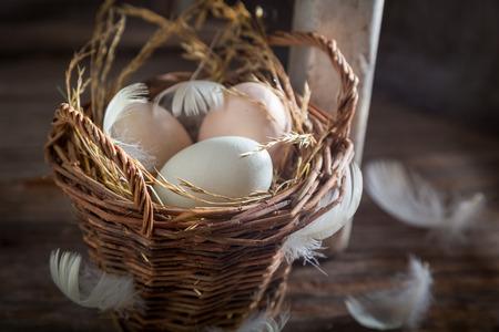 鶏小屋から新鮮な放し飼い卵