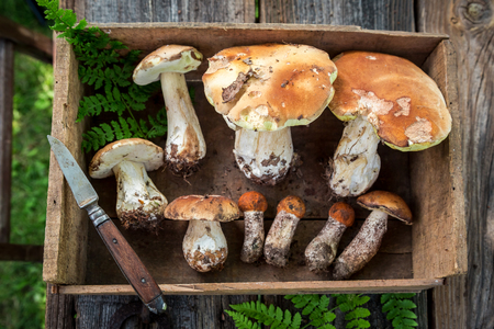 Healthy wild mushrooms straight from the forest Stock Photo