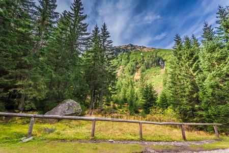 Autumn forest in the Tatras mountains, Poland Stock Photo