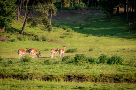 Beautiful deers in forest in summer, Poland, Europe Stok Fotoğraf