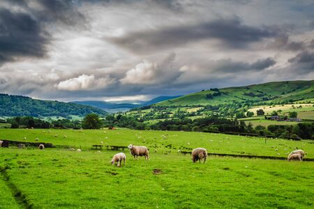 Sheeps grazing on pasture in District Lake, England, Europe Banco de Imagens - 90512990